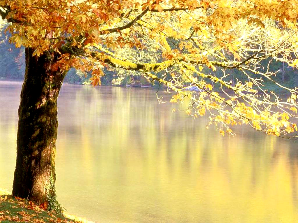 autumn-wallpaper-050